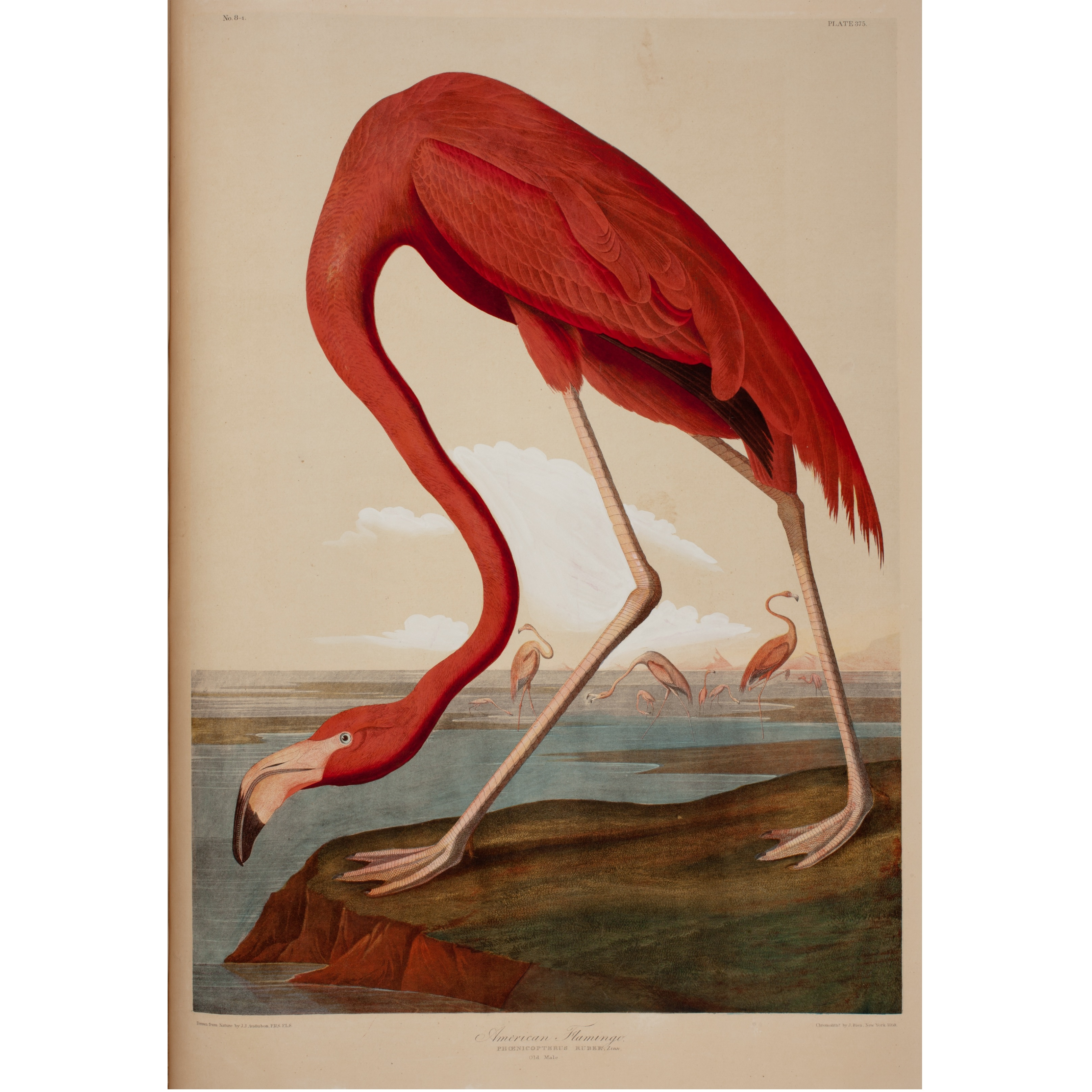 The Oversized Bien Volume Often Called A Double Elephant Folio Was Collaboration Between John James Audubon S Son Woodhouse