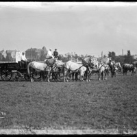 Image of horse driven carts on the grounds of the Worcester Fair