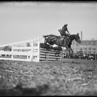 Horse jumpers at New England Fair, Worcester