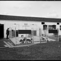 Dog kennel at the New England Fair