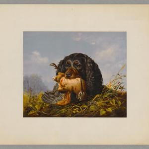Spaniel and woodcock