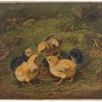 521681-chickens.jpg