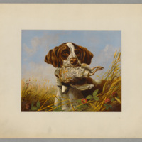 Pointer and quail