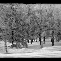 Snowy scene in Worcester