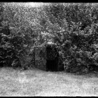 Gate surrounded by bushes